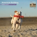 American Bulldog - Kalender 2016