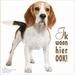 Ik Woon Hier Ook! - Beagle