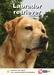Lente Aanbieding Labrador + Hondenopvoeding