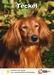 Lente Aanbieding Teckel + Hondenopvoeding