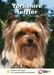 Lente Aanbieding Yorkshire Terrier + Hondenopvoeding
