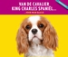 Cavalier King Charles - Cadeauset - ACTIE